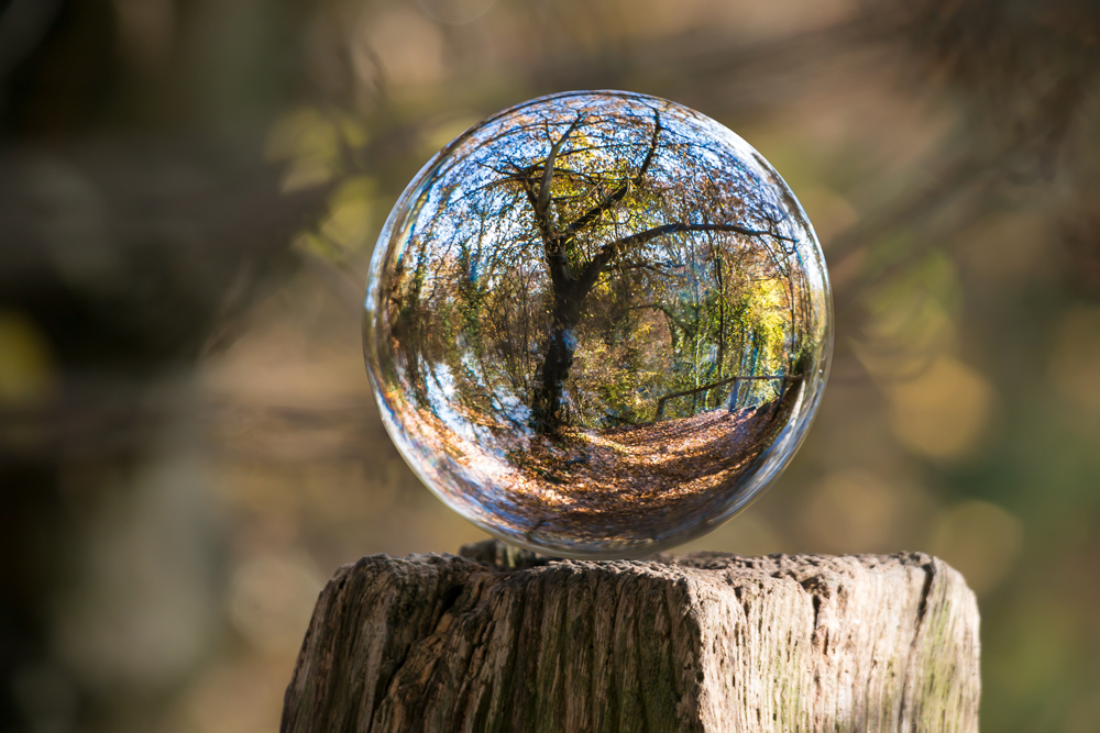 tree bubble